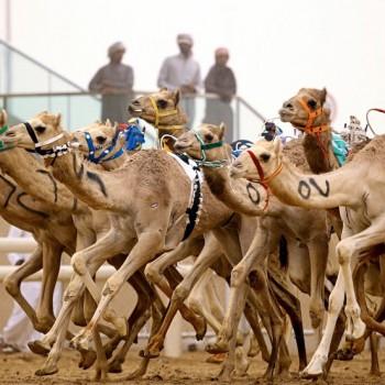 Outdoor Adventures Your Family Can Enjoy in Dubai